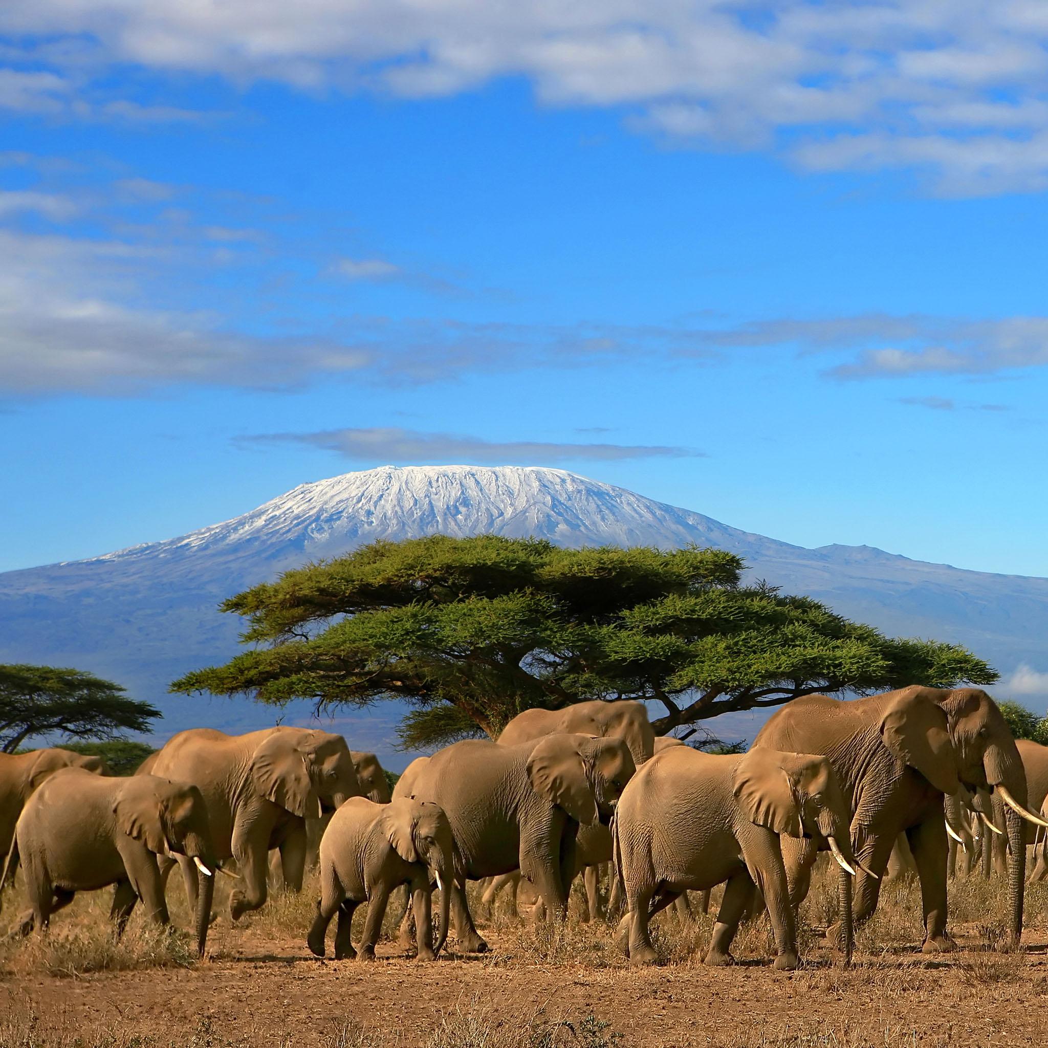 Mount-Kilimanjaro-And-Elephant-Herd-Kenya