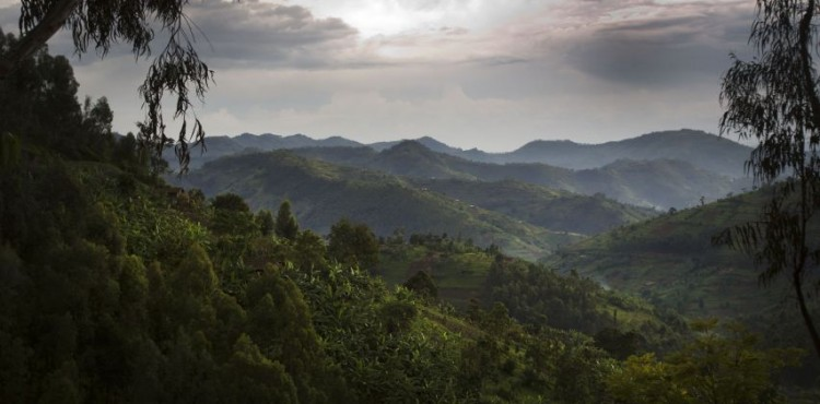 Volcanoes-National-Park-Rwanda-750x370
