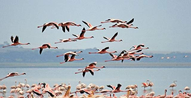 Lake-Nakuru-National-Park-Kenya-Bird-watching-640x330