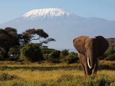 mount-kilimanjaro-tanzania_9095_600x450_elephant kilimandjaro